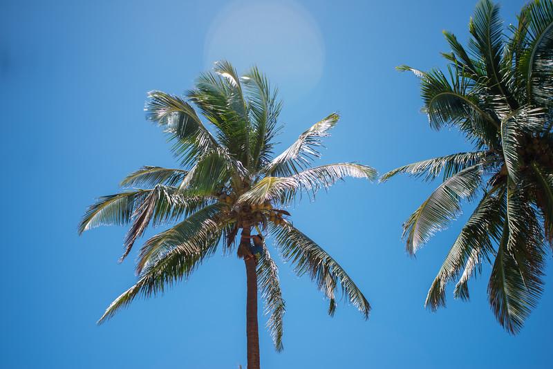 Hawaii2019-667.jpg