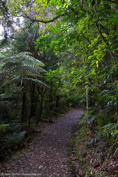 New Zealand bush walk