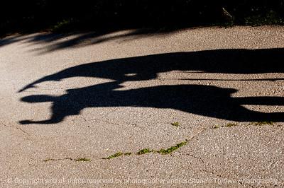 Shadows Portfolio