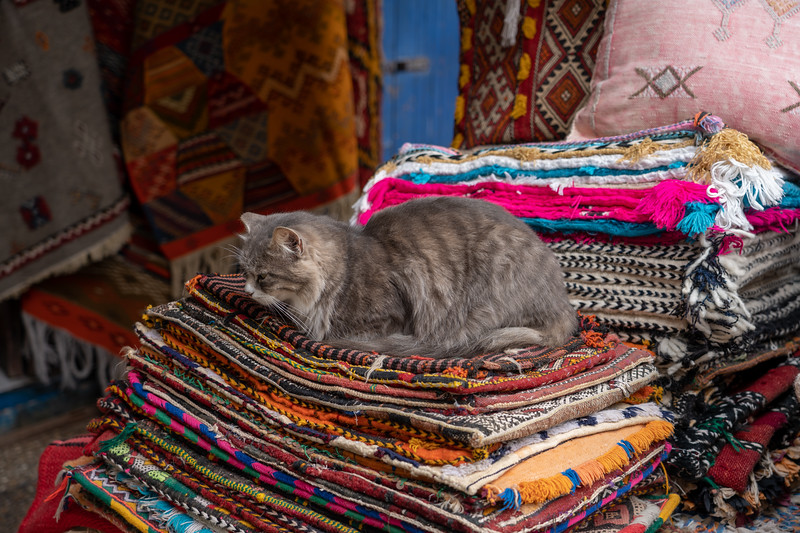 Cat in Essaouira, Morocco