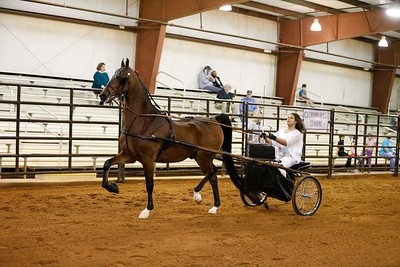 3.Pleasure Driving Horse-Any Breed,Any Driver