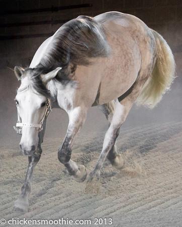 Horses, Ponies, Donkeys, Zebras