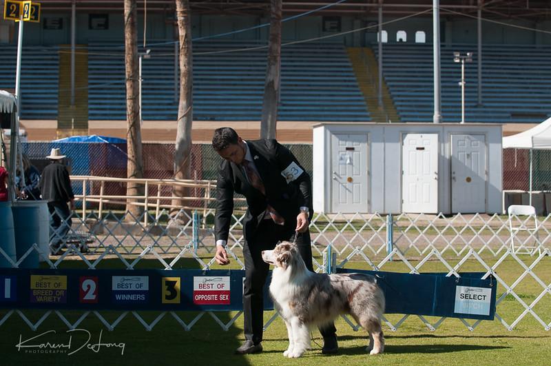 20170205_Australian Shepherds_Lost Dutchman Kennel Club-196.jpg