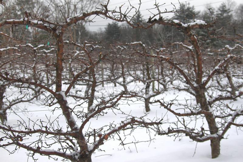 Easy Pickins Winter 018-1676784708-O.jpg