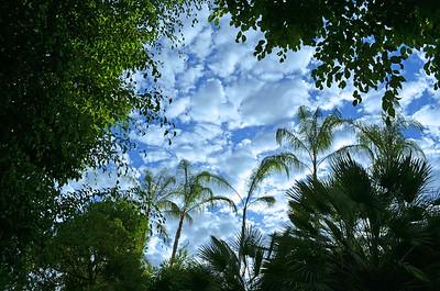 Sky & Trees on Las Brisas