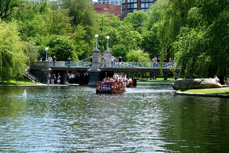 Full moon at high noon: A swan (left) decided to moon the tourists on the swan boat...Welcome to Boston.