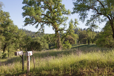Nevada County Agriculture