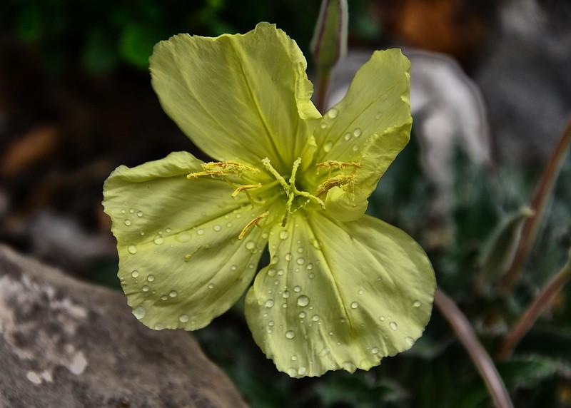 NEA_2161-7x5-Flower.jpg