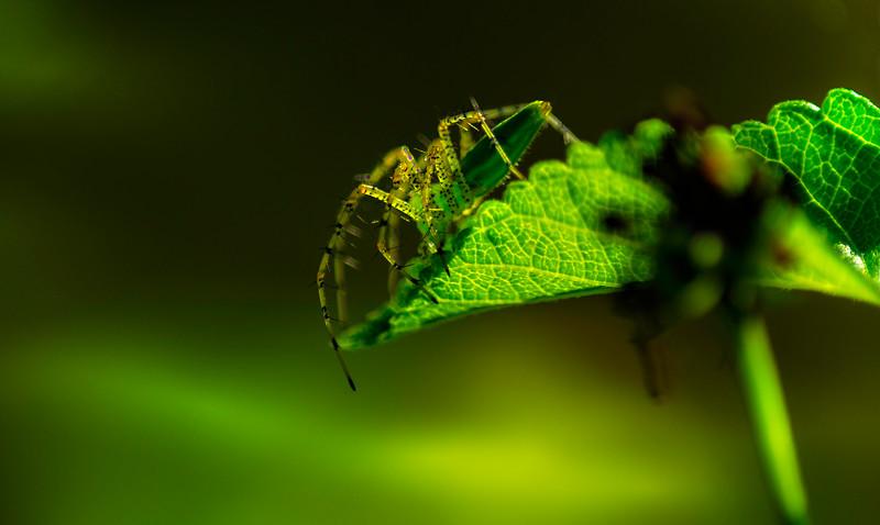 Spiders-Arachnids-070.jpg