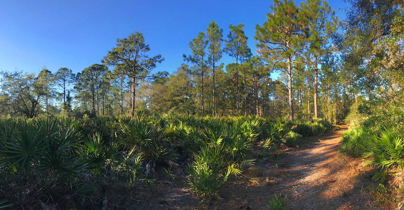 Hickory Bluff Preserve, Volusia County (12-31-17)