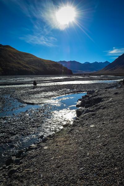Denali-National-Park-86.jpg