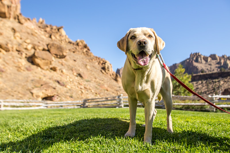 Dogs Of Smith Rock-32.jpg