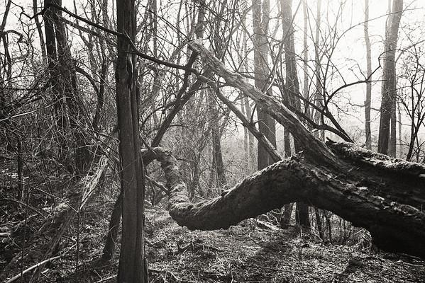 050209 SW | Wald Roßberg