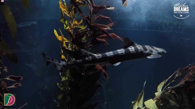 Expedition Pufferfish Day 4.00_12_12_09.Still034.jpg