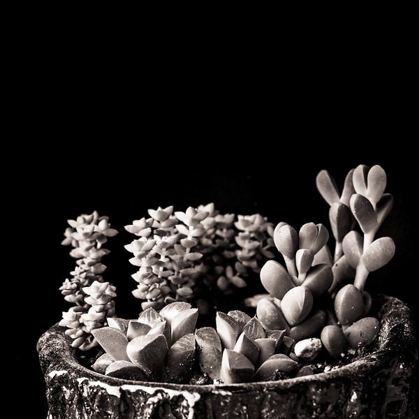 Succulents-8577.jpg