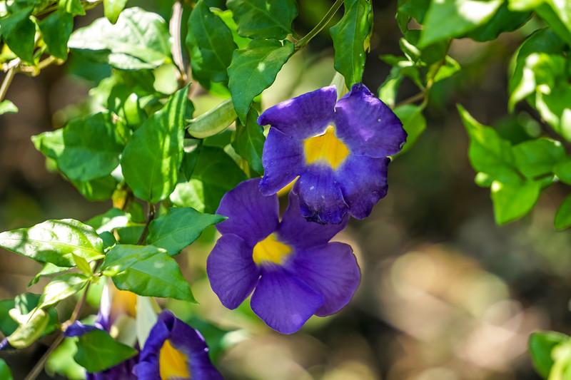 Mead-Gardens-19.jpg
