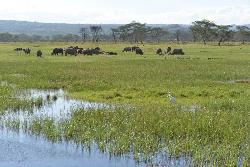 East Africa Safari 108.jpg