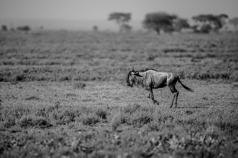 Tanzania_Feb_2018-269.jpg