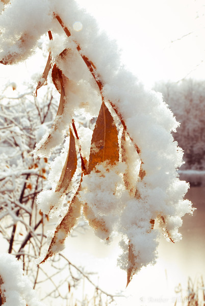 First Snow-11.jpg
