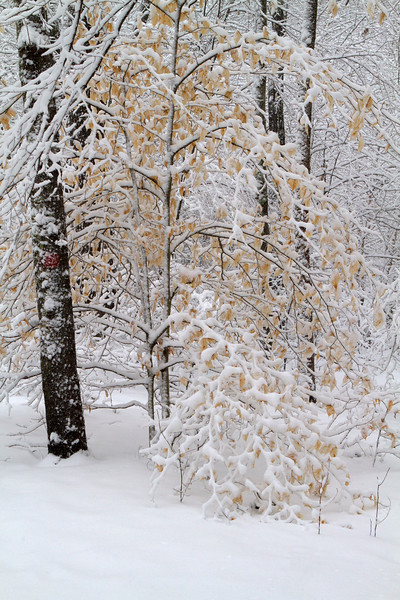 Smithville Snow Trails-280.jpg