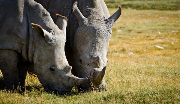 Safari 1, Kenya