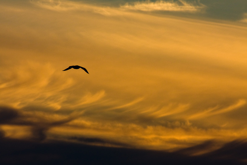 Atomic gull
