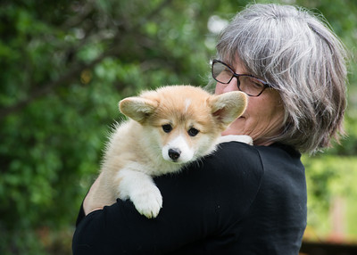 Jazzy & Duncan puppies