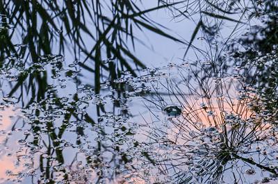 Enchanting Pond