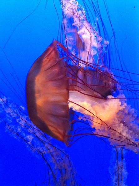 Monterey aquarium.