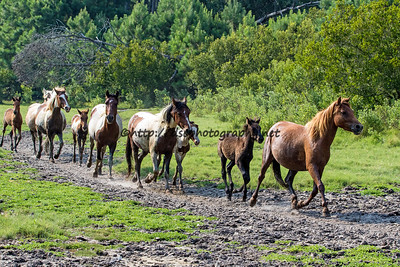 Southern Herd Roundup