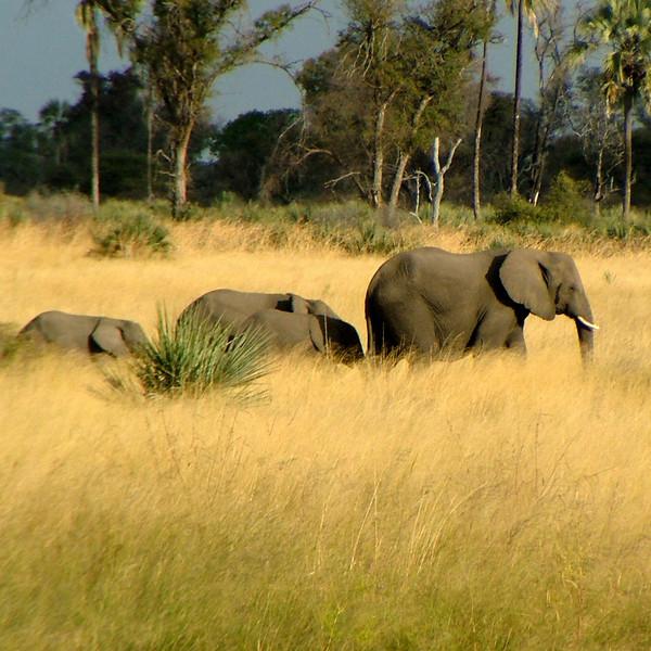 Africa 2004-15.jpg