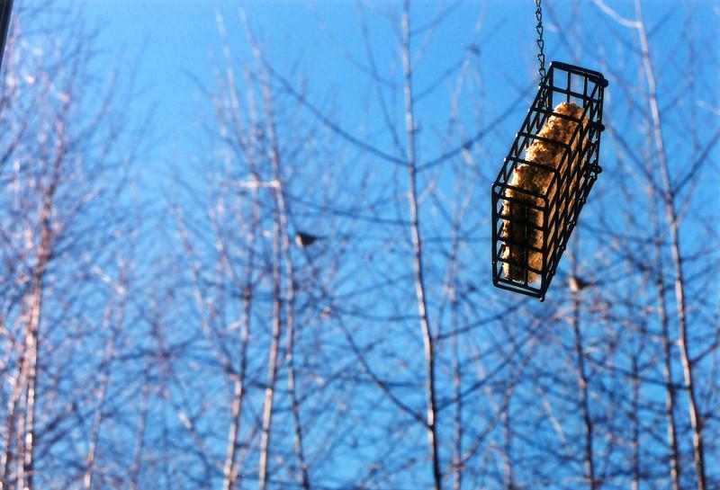 birdhanger.jpg