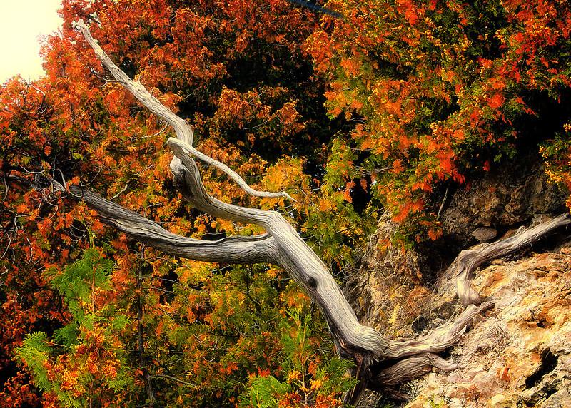 Dead wood  tree  final .jpg