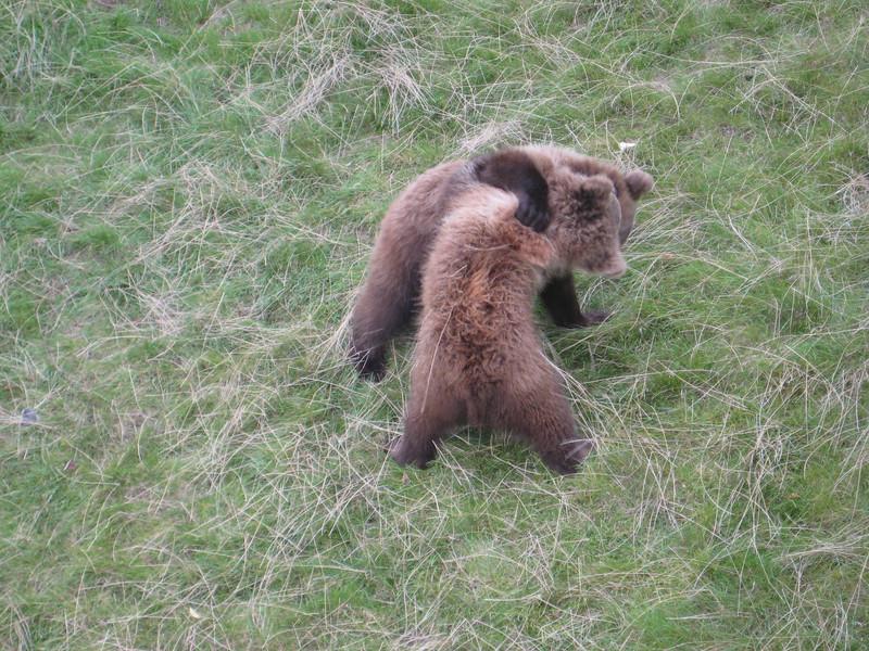 bears_07.jpg