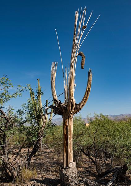 Arizona_090617_1065.jpg