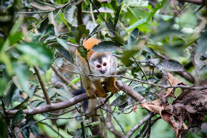 wildlife-4-Portfolio-46.jpg