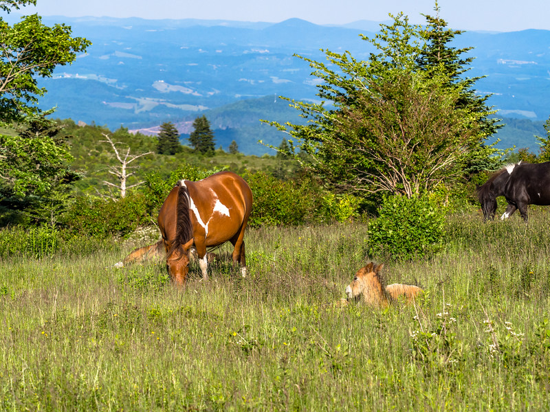 62 Jun 15 pony and foal-1.jpg