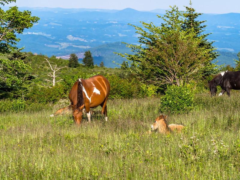 62 Jun 15 pony and foal-1.jpg