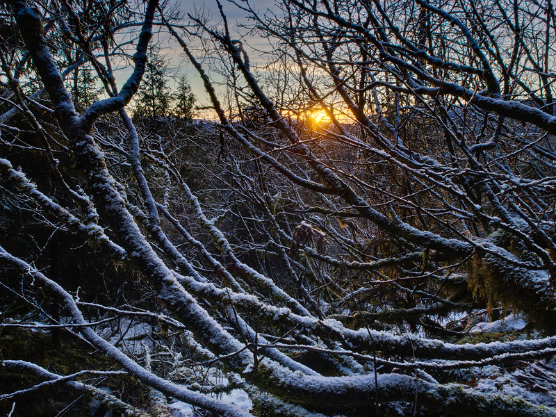 Fractal Sunset. Looking Northwest from the East Glacier trail through an Alder bramble. Captured February 7th, 2011.