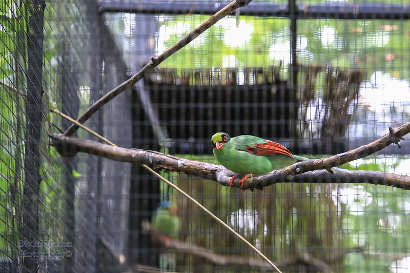 2016-07-17 Fort Wayne Zoo 678LR.jpg