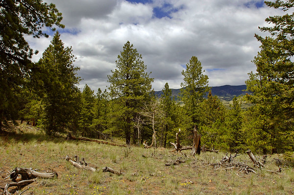 Pike Trails Ranches Property Sale