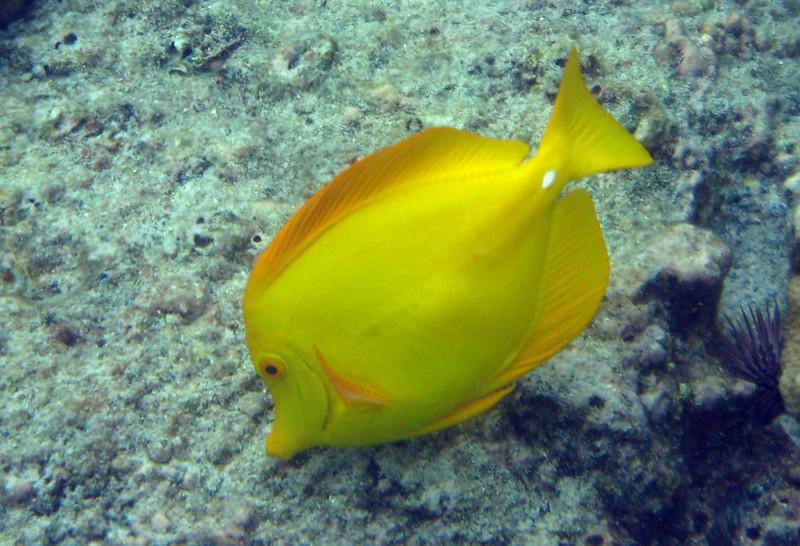 460- 20080416- Hawaii 20-Snorkelling IMG_0649.jpg