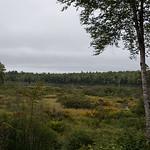 Green Woodlands Images