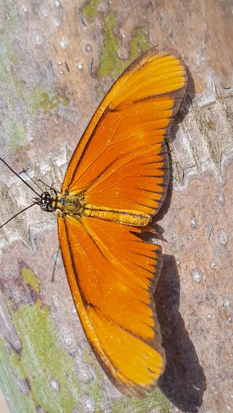 Mariposa Naranja :)