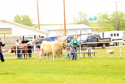 Senior Beef Showmanship Sat