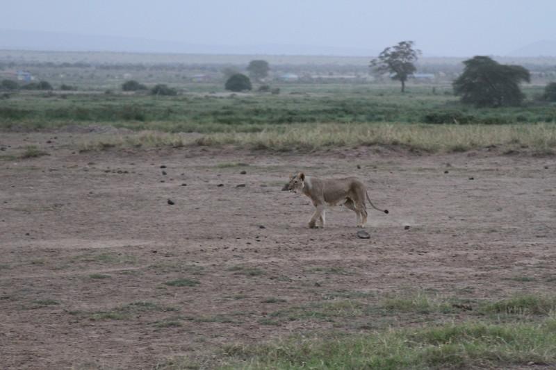 Kenya 2019 #2 1695.JPG