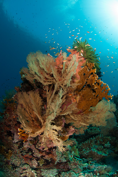 tubbataha-reef-2017-divehappy-chris-mitchell-13.jpg