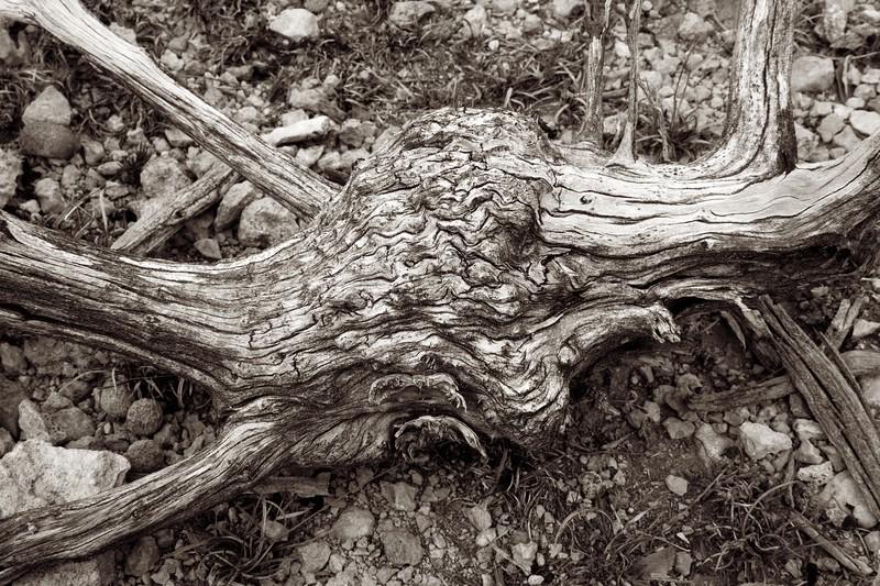 C Photo Lenswork 2006-11-25 Wood Study 2103.jpg