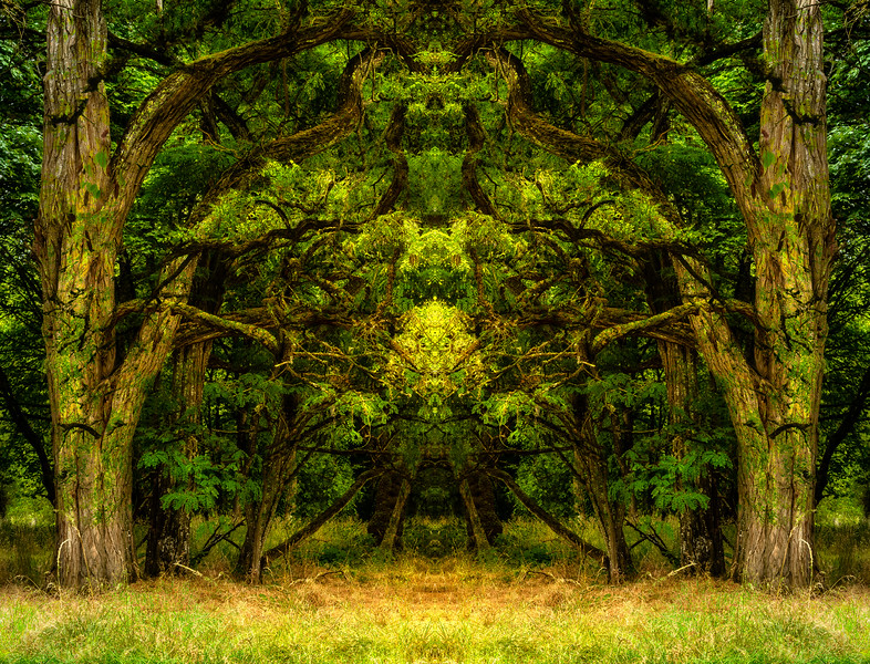 A Gateway in the Forest.