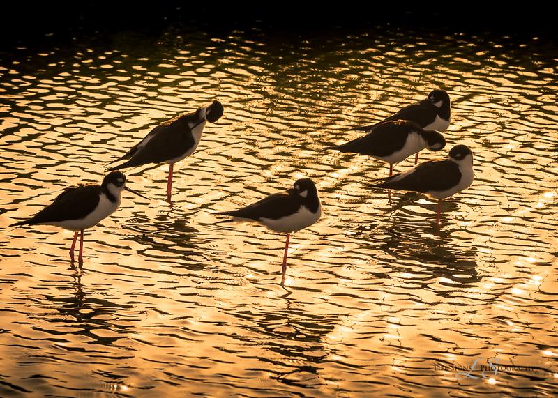 SPI-Easter-Birds-1-3.jpg